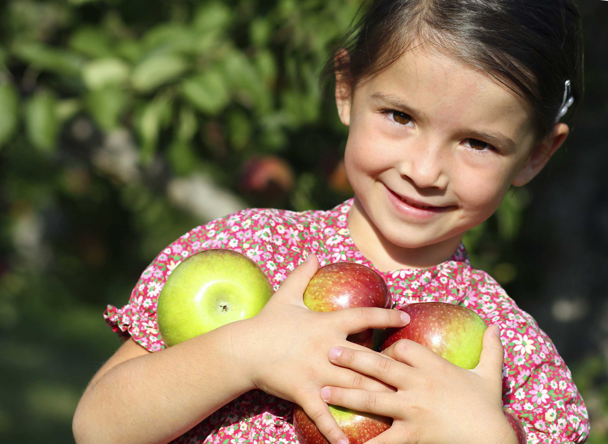 Apple Harvest at Arbor Day Farm